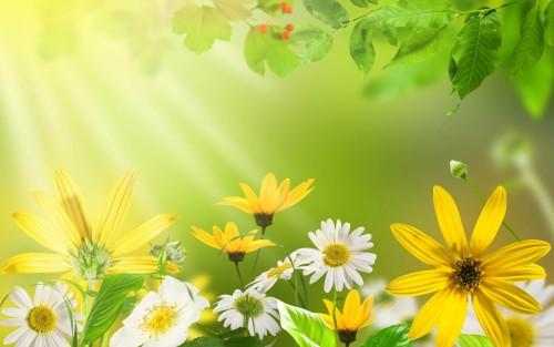 Flowers197.jpg