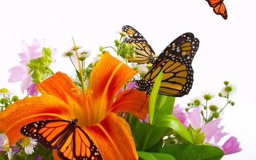 Flowers200.jpg