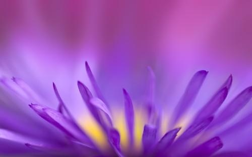 Flowers21.jpg
