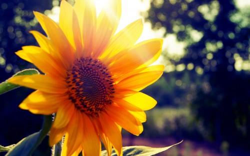 Flowers22.jpg