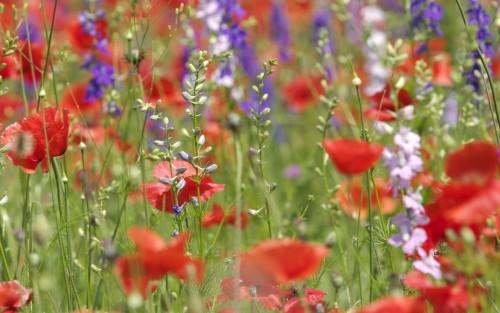 Flowers26.jpg