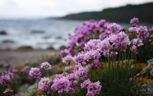 Flowers32.jpg