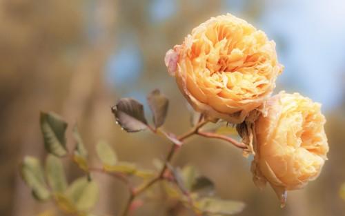 Flowers33.jpg