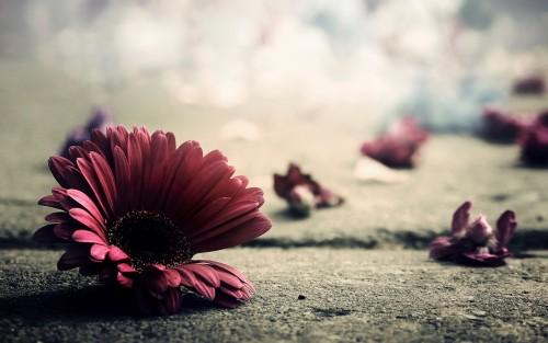 Flowers35.jpg