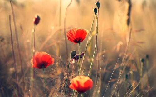 Flowers37.jpg