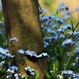 Flowers38