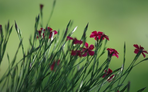 Flowers41.jpg