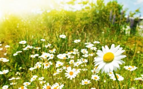 Flowers44.jpg