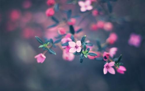 Flowers45.jpg
