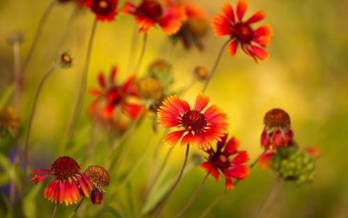 Flowers48.jpg