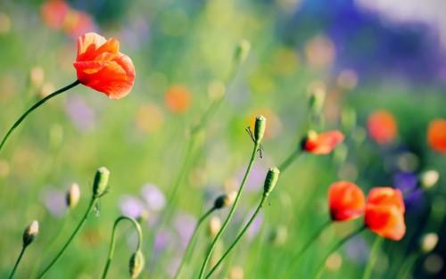 Flowers53.jpg