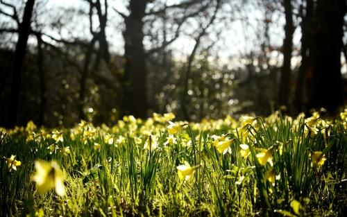 Flowers67.jpg