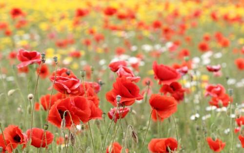Flowers71.jpg
