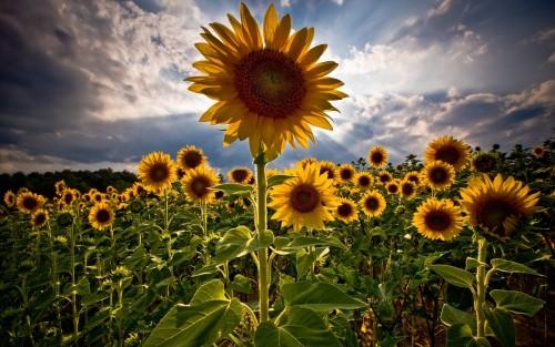 Flowers72.jpg