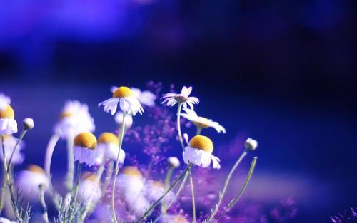 Flowers75.jpg