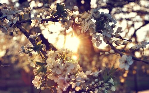 Flowers76.jpg