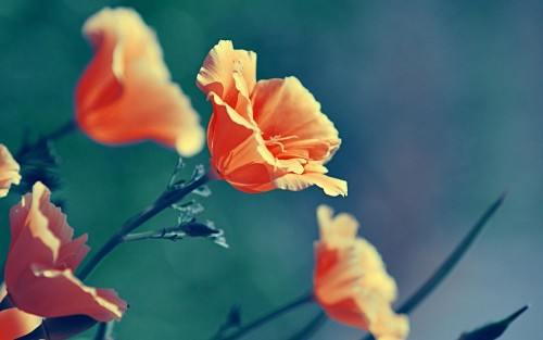 Flowers77.jpg