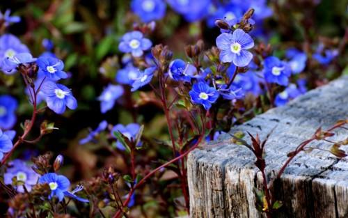 Flowers78.jpg