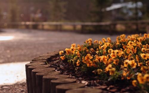 Flowers80.jpg