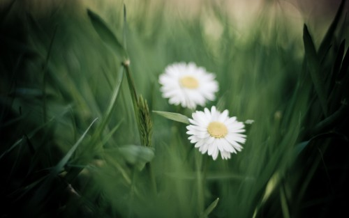 Flowers81.jpg