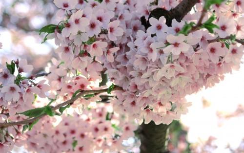 Flowers84.jpg