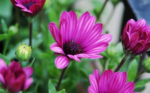 Flowers85.jpg