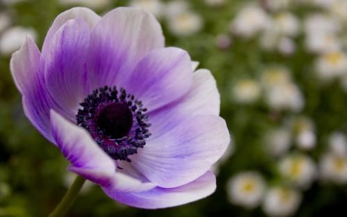 Flowers86.jpg