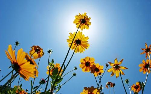 Flowers90.jpg