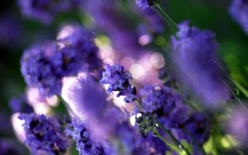 Flowers92.jpg