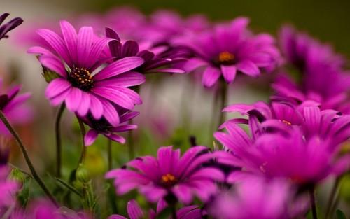 Flowers96.jpg