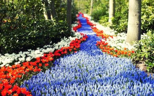 Flowers97.jpg