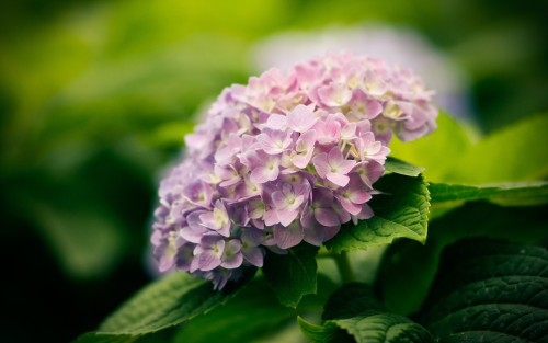 Flowers98.jpg