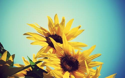 Flowers99.jpg