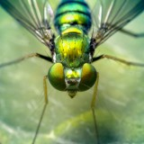 00516649424-GreenFly