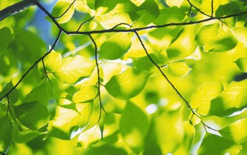 MakroFoto68.jpg
