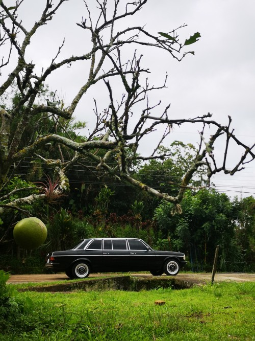 COSTARICAAPPLETREE.MERCEDES300DLIMOUSINESERVICE.jpg